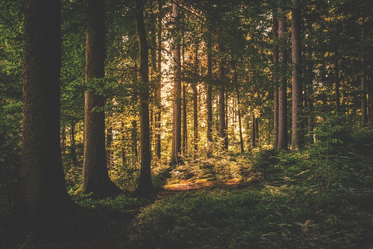 """Forest Therapy nelle Madonie: il Parco Siciliano perfetto per le """"immersioni"""" nel verde"""